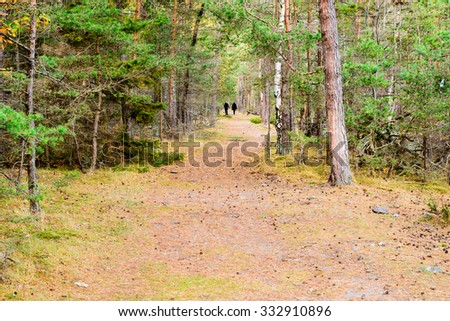 A straight hiking trail or path in pine forest in fall. The odd birch tree is mixed in with the pines. Pine needles are scattered on the trail. An unknown adult couple is walking away in the distance. - stock photo