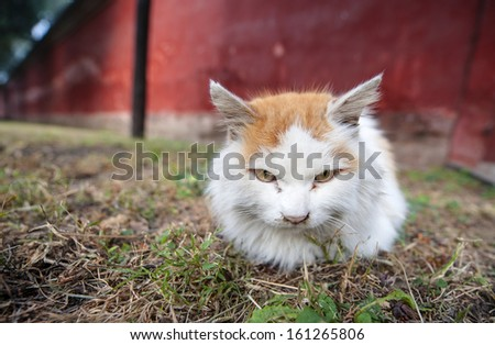 A stray cat in Ditan temple of Beijing, China. - stock photo
