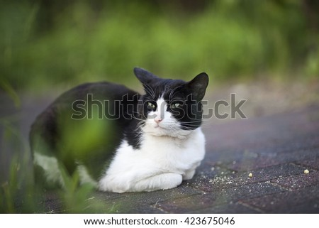 A stray cat is waiting for forever home - stock photo