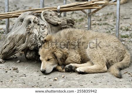 A stray puppy dog. - stock photo