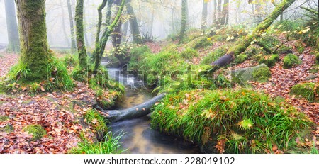 Foggy autumn woodland at golitha falls in cornwall stock photo