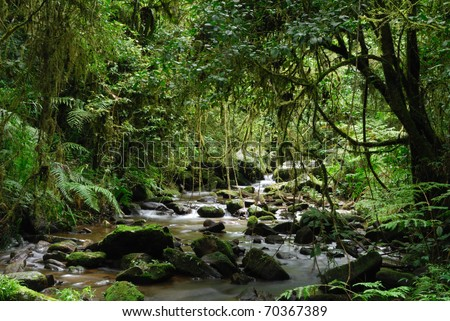 A stream in the primary rainforest of Ranomafana National Park, eastern Madagascar - stock photo