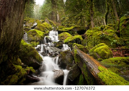 A stream meanders through a beautiful rain forest with cedar and fir trees near Harrison Lake in British Columbia, Canada. - stock photo