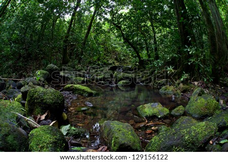 A stream tumbles downhill through a thick jungle on the island of Raiatea in French Polynesia.  This beautiful island is surrounded by a barrier reef and covered by thick rainforest. - stock photo