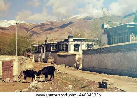 A street scene in a rural village in the Himalayas, Tibet. Focus on the animals. Added vintage filter. - stock photo