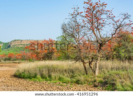 A stretch of grass land in River bed - stock photo