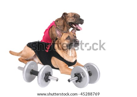 a strong workout dog in outfit with his girlfriend in pink over white