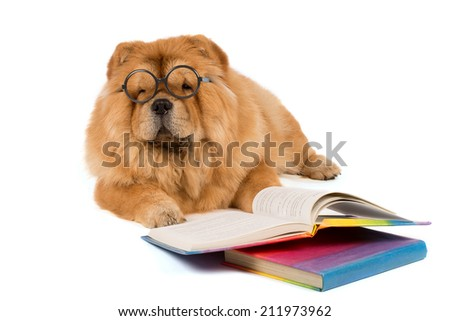 a student dog chow chow with the books - stock photo