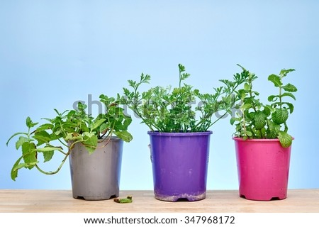 A studio photo of various potted garden herbs - stock photo