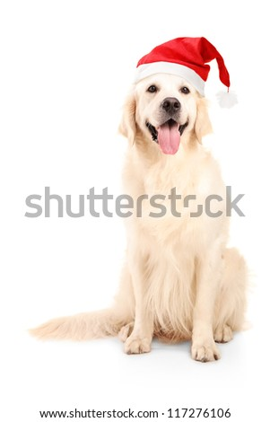 A studio shot of a dog wearing a christmas hat isolated on white background - stock photo