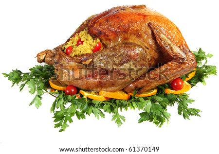 A stuffed, roast turkey on a bed of Italian flat-leaf parsley, garnished with sliced of orange and cherry tomatoes. Studio isolated - stock photo
