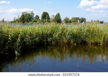 A summer lake landscape with grass and trees