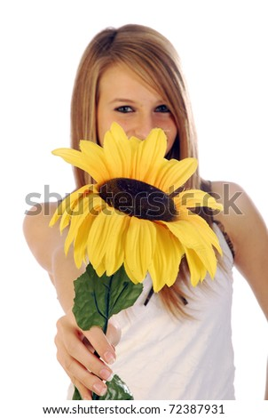 A sunflower for summer - stock photo