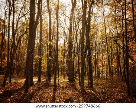 A sunlit forest landscape in golden and orange Autumn colors.