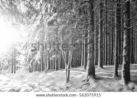 stock-photo-a-sunny-day-a-winter-in-a-fo