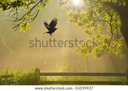 A surreal looking misty foggy sunrise in the back garden with a raven in flight. - stock photo