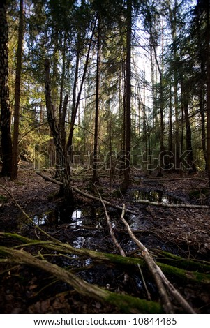 A swamp nature image with a water reflection and forest - stock photo