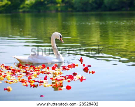 A Swan with petals