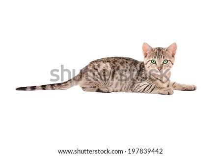 A tabby kitten sitting on white - stock photo