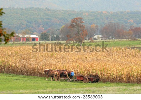 a team of Amish work horses pulling a wagon through a field - stock photo