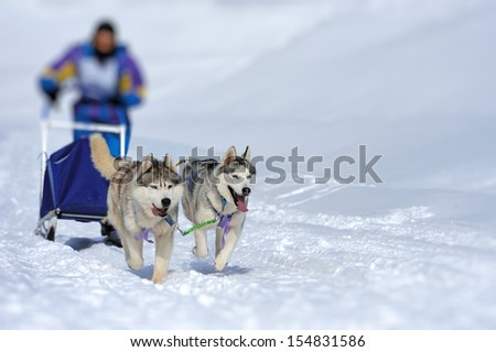 A team of Siberian sled dogs pulling a sled through the winter forest - stock photo