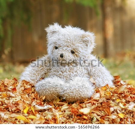 a teddy bear in a pile of leaves - stock photo