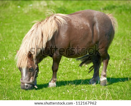 A telephoto of horses in natural setting - stock photo