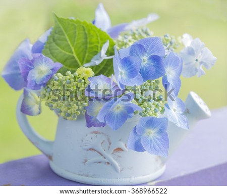a terracotta vase painted blue with a lace cap hydrangea  - stock photo