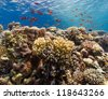 A thriving coral reef in the red sea - stock photo
