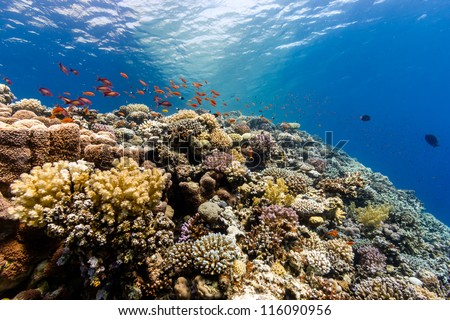 A thriving,healthy coral reef covered in hard corals, soft coral with abundant fish life - stock photo