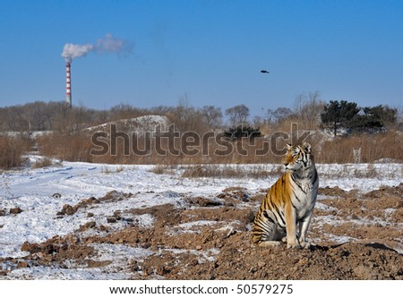 A tiger in front of an industrial smoke stack - stock photo