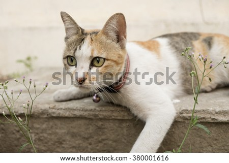 A tiger (tabby) cat relaxing on the floor. - stock photo