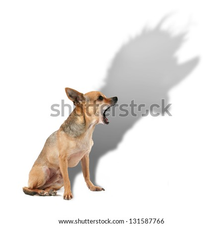 a tiny chihuahua with a large shadow - stock photo