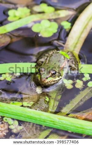 A tiny frog sitting in the grass of the river Sok. - stock photo