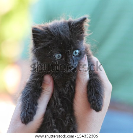 a tiny kitten being held by two hands - stock photo
