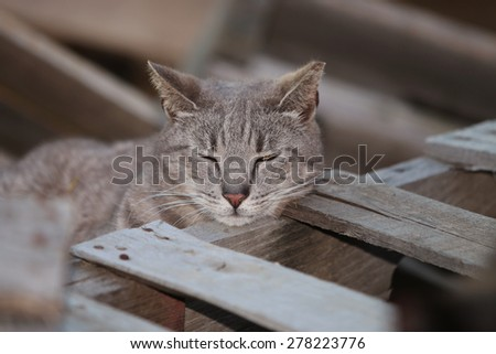 A Tired Wild Feral Cat Resting Within a Pile of Wooden Shipping Pallets - stock photo
