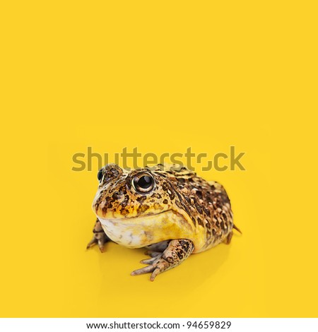 A Toad on a yellow background