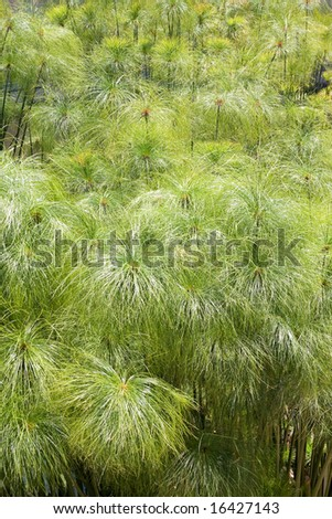 a top of bamboo background