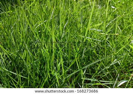 A top view on grass - stock photo