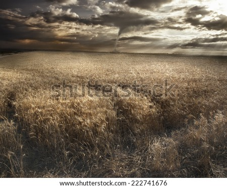 A Tornado forming in field of wheat - stock photo