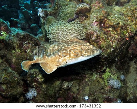 A Torpedo Electric Ray Bumps Around On Coral Stock Photo