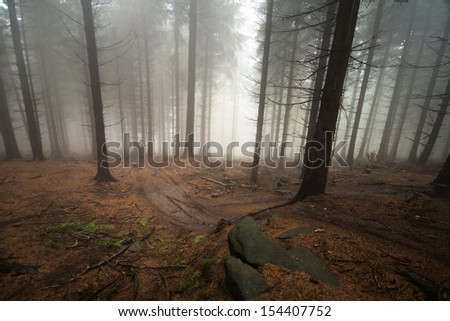 A track that goes between pine trees in the forest covered in fog during autumn with a rock on the foreground - stock photo