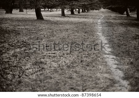 A track worn by foot traffic through a grove of trees in a parkland