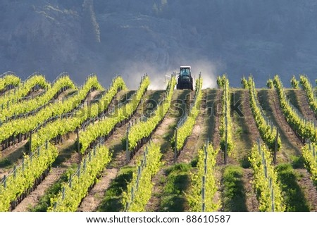 A tractor spraying rows of grape vines in a vineyard in the Okanagan. Early morning. British Columbia, Canada. - stock photo
