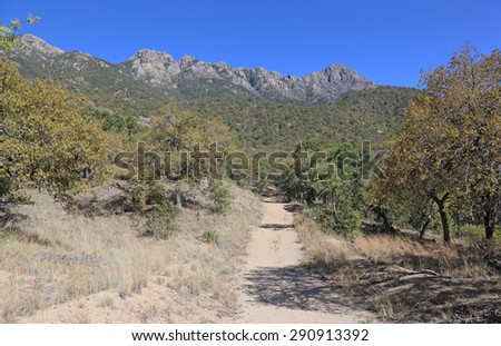 A trail in Madera Canyon, in the Santa Rita Mountains, located in Arizona, United States.  - stock photo