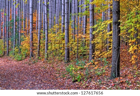 A trail in the woods decorated with the yellow leaves of Autumn. - stock photo