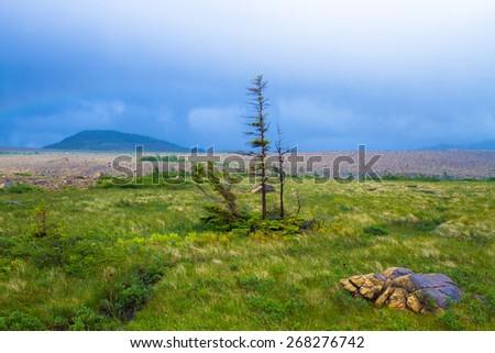 A trail through beautiful wilderness in Newfoundland, Canada - stock photo