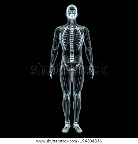 A transparent view of the human body and the skeletal structure. - stock photo