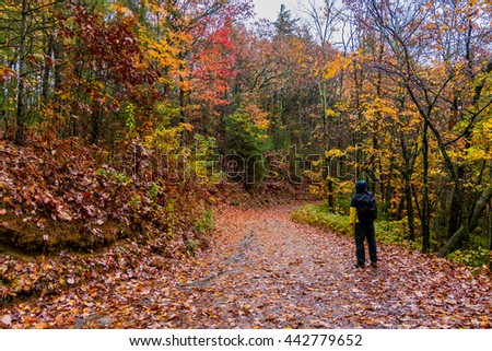 A traveler is walking in the forest during the fall foliage season in Virginia, USA Colorful leaves - stock photo