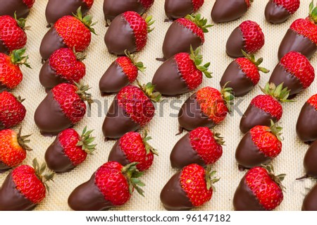A tray of chocolate covered strawberries ready to serve - stock photo